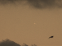 Bird and Venus inferior conjunction (static)